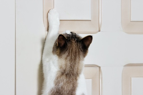 閉まった扉に手を伸ばす猫