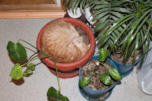 植木の中で丸くなった猫
