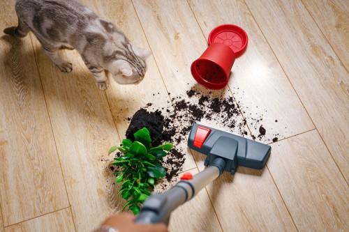 植木鉢を落とした猫と掃除機