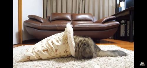 お尻だけはみ出ている猫