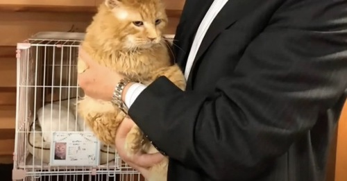 抱っこされる元ボス猫