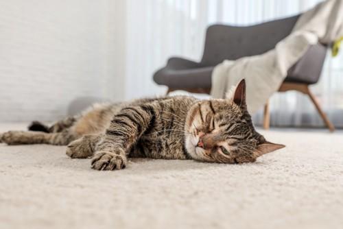 カーペットの上で寝る猫