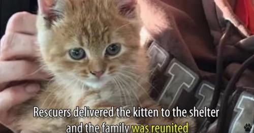 抱っこされるチャトラの子猫