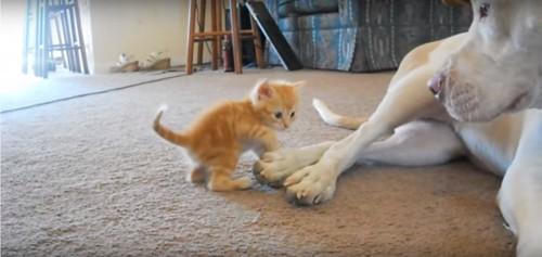 猫と遊ぶ犬