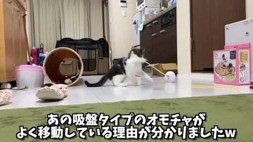 おもちゃをくわえる子猫