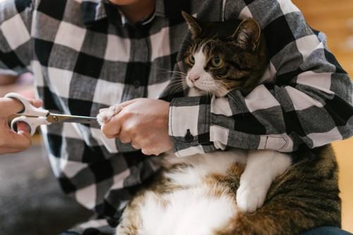 爪を切られて嫌そうな猫