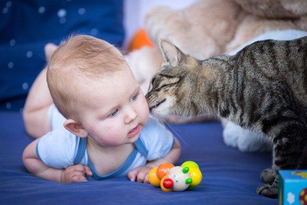 子どもを舐める猫