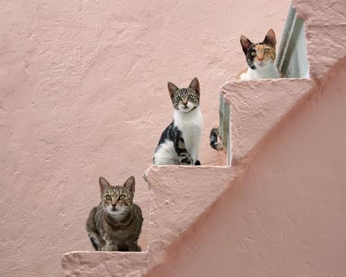 階段でシンクロする猫達