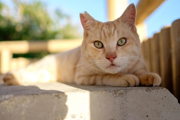 沖縄の猫島2