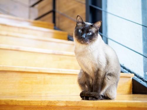 尻尾を足に巻きつけて階段の途中に座る猫