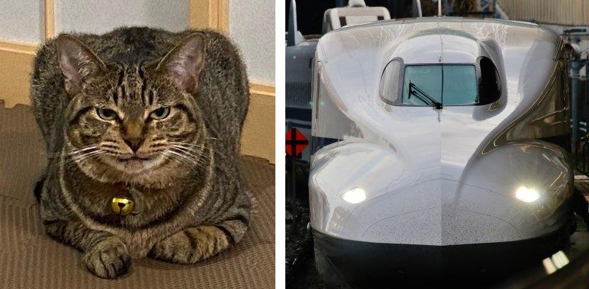 新幹線みたいな猫と新幹線の比較写真