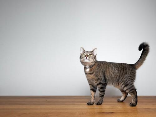 しっぽを曲げて上を見つめる猫