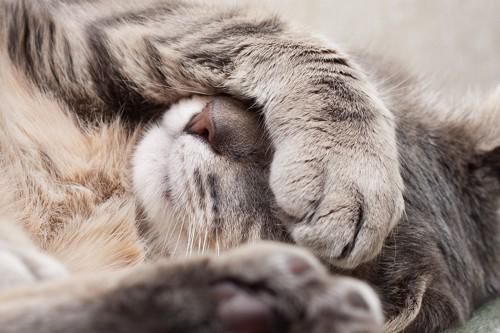 顔を手で覆う猫