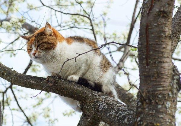 木の上に登った三毛猫