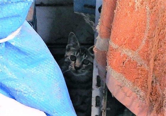 隙間に隠れる猫