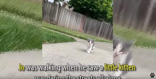 路上にいる子猫