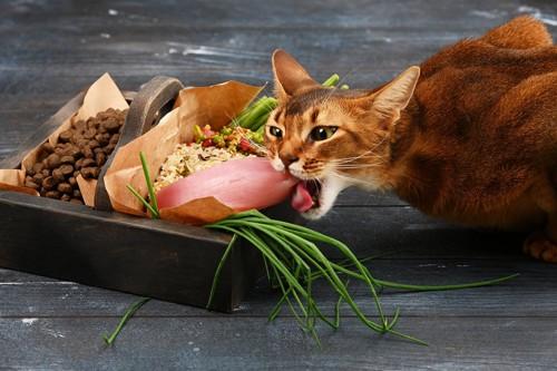 豪華なご飯にかぶりつく猫