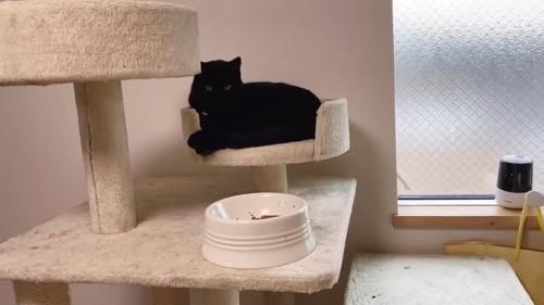 黒猫とお皿