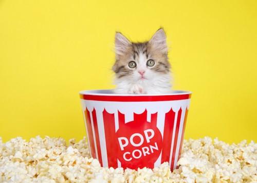 ポップコーンの箱に入った子猫