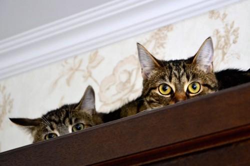 家具の上に乗る二匹の猫