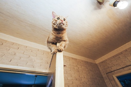 ドアの上に居る猫