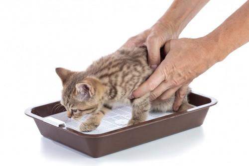 子猫をトイレから出す飼い主の手