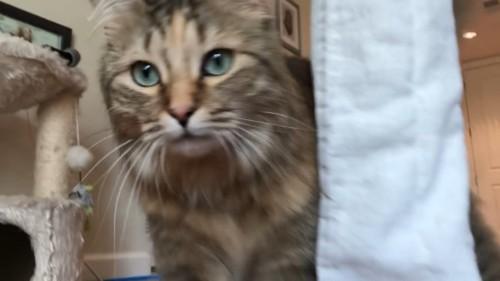 猫ドアップ