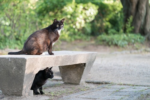公園にいる猫