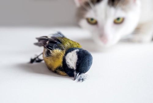 狩った鳥を運ぶ猫