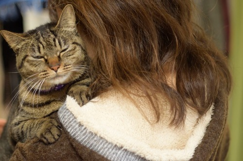 女性に抱っこされて嫌な顔をする猫