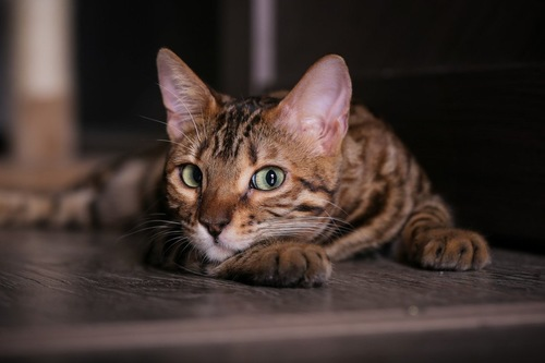 横目で見る猫