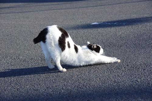道路で伸びをする白黒の猫