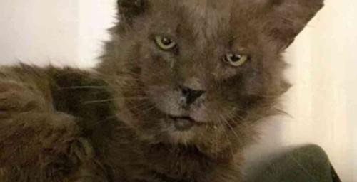 グレーの猫の顔