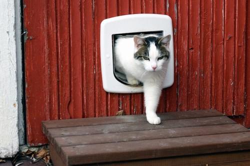 猫用の木の扉から出てきた猫