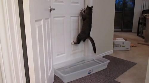 再びジャンプする猫