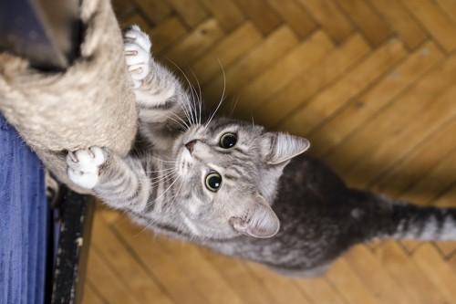 ポール型の爪研ぎで爪をとぐ猫