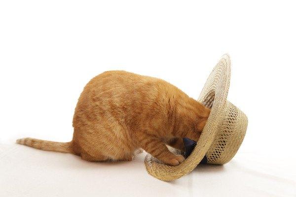 帽子に顔を突っ込む猫