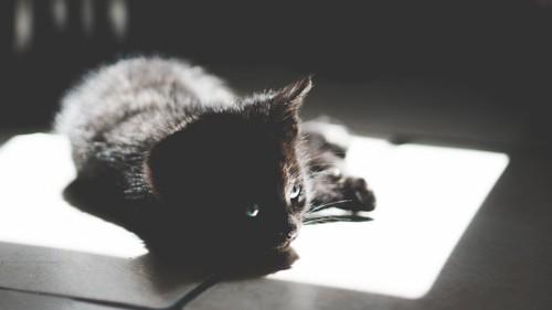 日なたにいる黒猫