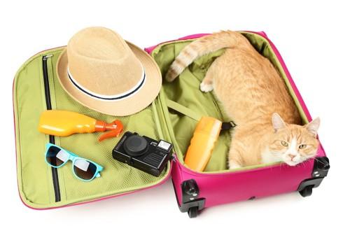 スーツケースに入ってくつろぐ猫
