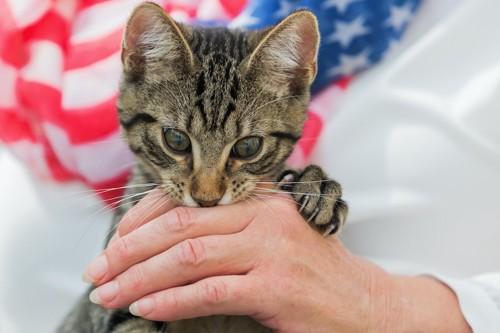 飼い主の手を噛んで爪を立てる猫