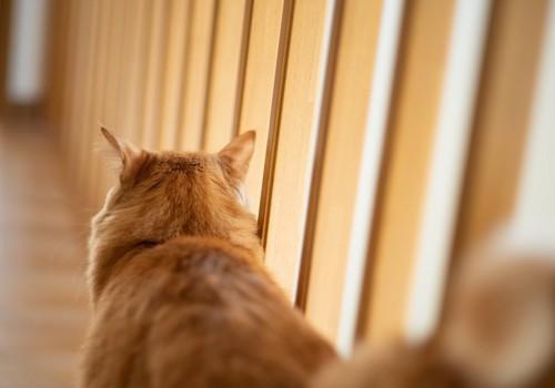 後ろを向いて立っている茶トラの猫