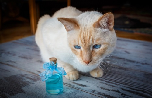 香水の瓶を見つめる猫