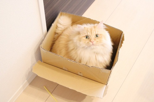 箱に入ってる