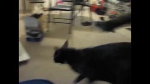ソファーから降りる猫