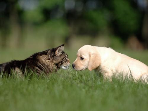 向かい合う猫と犬