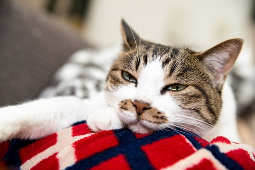 不満げに見る猫