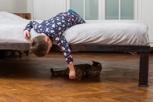 ベッドの下に居る猫