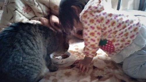 エサを食べる猫と猫に寄り添う幼児