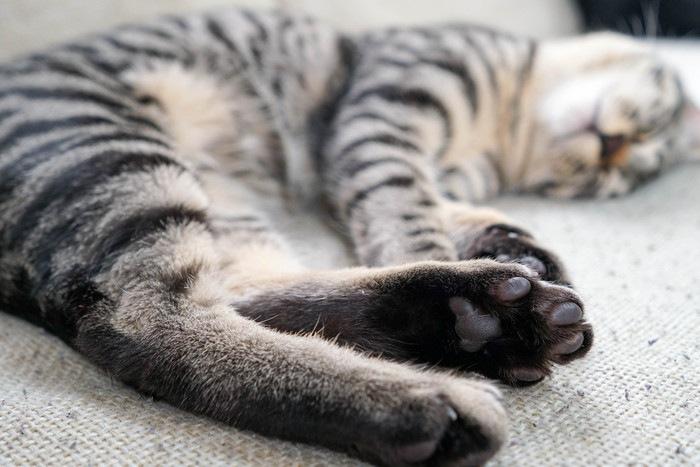 肉球を見せながら寝ている猫