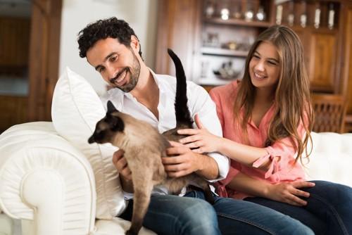 猫を構う人たち